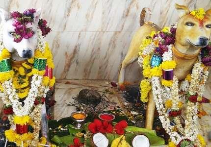 Tham quan ngôi đền thờ Thần Chó nổi tiếng nhất của Ấn Độ