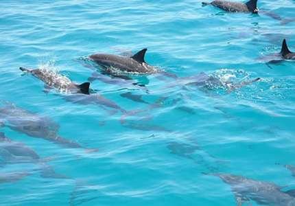 Du lịch Maldives dịp Hè nô đùa cùng cá Mập