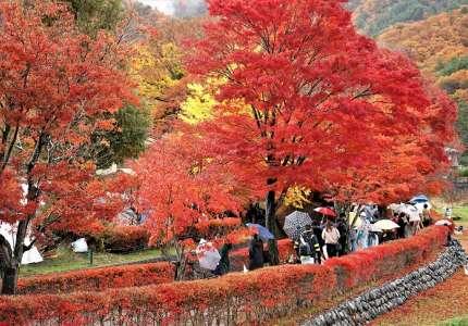 Du lịch Nhật Bản 6 ngày 5 đêm mùa lá đỏ và những điều bạn nên biết