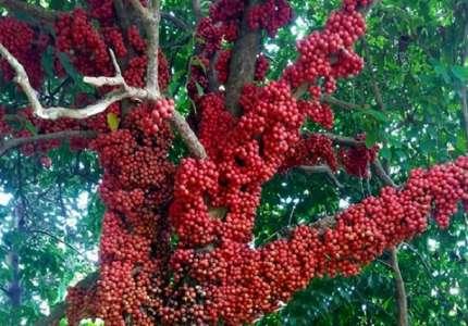 Du lịch Phú Yên - Vân Hòa mùa cây đỏ