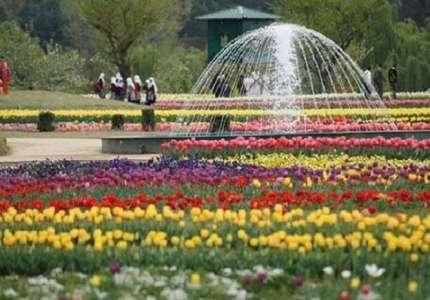 Chiêm ngưỡng vẻ đẹp của vườn hoa tulip lớn nhất châu Á