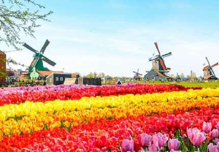 Du Lịch Châu Âu tham dự lễ hội hoa Keukenhof