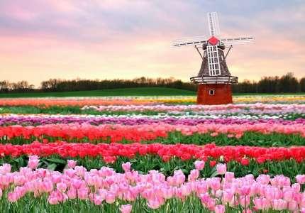 Thăm quan vườn hoa Keukenhof rực rỡ tại Hà Lan