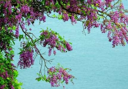 Lên Sơn Trà ngắm hoa và biển đảo