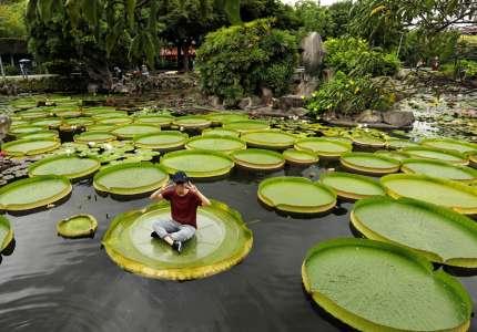 Check in lá sen khổng lồ tại Đài Bắc - Đài Loan