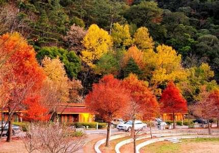 TOP 10 địa điểm du lịch Đài Loan mùa thu ngắm lá phong hấp dẫn