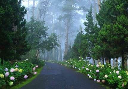 Nên đi du lịch Đà Lạt vào tháng mấy mùa nào đẹp và hoa hoa nở rộ