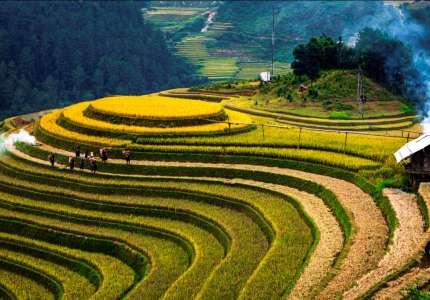Du lịch Hà Giang mùa lúa chín trên ruộng bậc thang