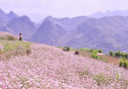 Những lý do sẽ khiến bạn phải đi du lịch Hà Giang tháng 10