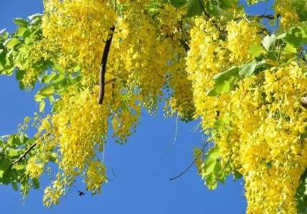 Trải nghiệm một mùa hoa vàng nở rộ