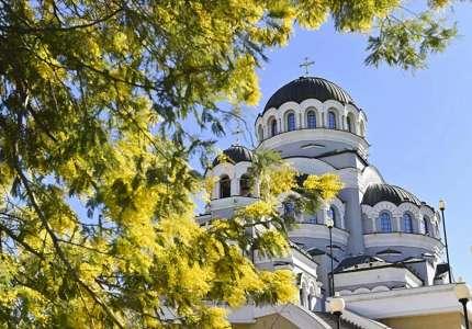 Du lịch Nga mùa hoa mimosa nở rộ