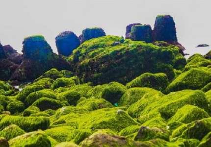 Chiêm ngưỡng vẻ đẹp bãi rêu xanh Nha Trang