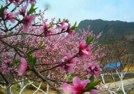 Du lịch Sapa mùa xuân có gì hấp dẫn khiến bạn phải đi