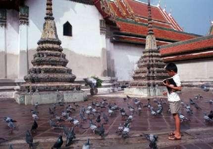 Trải nghiệm cùng đàn bồ câu ngợp trời ở ngoại ô Bangkok