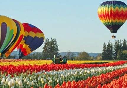 Du xuân Thổ Nhĩ Kỳ để ngắm những bông hoa Tulip rực rỡ