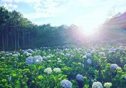 Mùa hoa Đà Lạt tháng mấy đẹp nhất