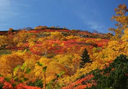Những điểm đón mùa thu sớm Tại Nhật Bản
