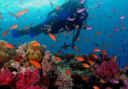 Tham quan đảo san hô Koh Larn – Pattaya Thái Lan