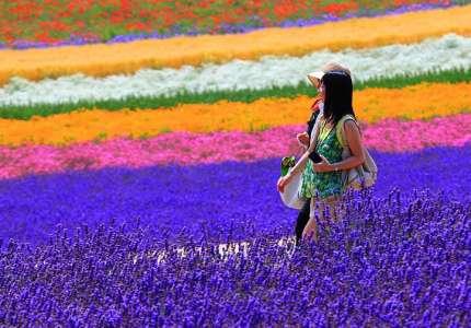 Trải nghiệm cung đường vàng Nhật Bản mùa hè