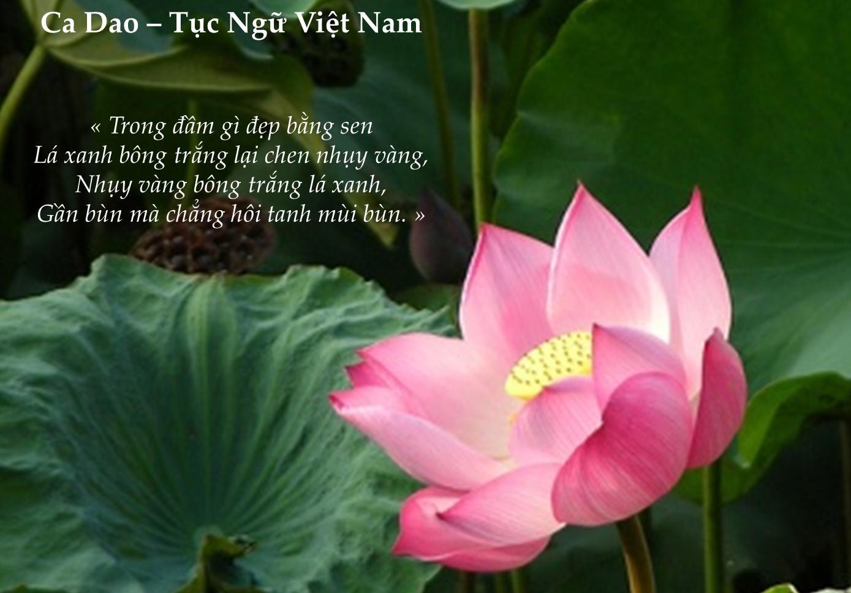 Phong tục tập quán Việt Nam qua ca dao và tục ngữ
