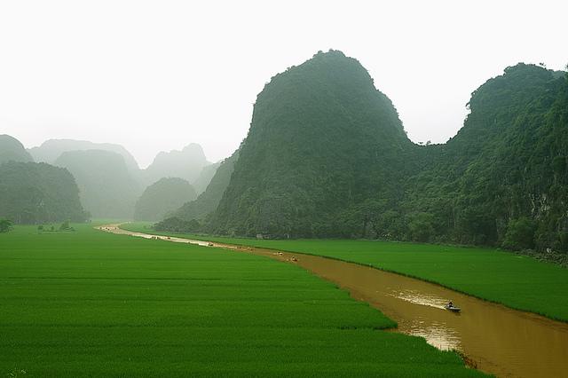 Mùa vàng trên dòng sông Ngô Đồng