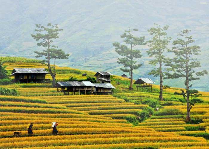 Tour du lịch Hà Nội Sapa 2 Ngày 3 Đêm