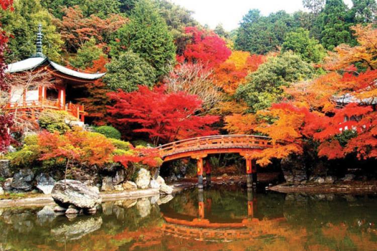 Du Lịch Nhật Bản Mùa Lá Đỏ 6 Ngày 5 Đêm Từ Hà Nội