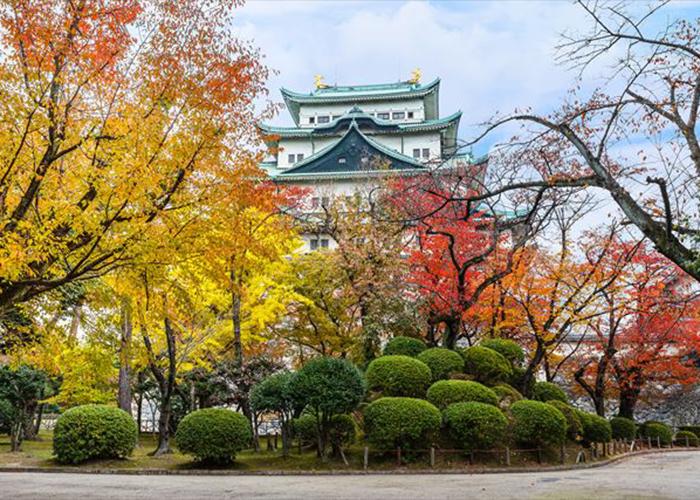 Du Lịch Nhật Bản Mùa Thu Lá Đỏ 6 Ngày 5 Đêm Từ Hà Nội