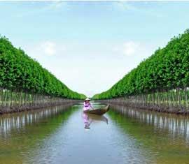 Tour Du Lịch Hồ Chí Minh - Miền Tây 5 Ngày 4 Đêm