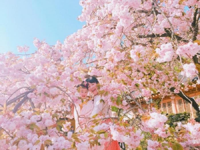 Du Lịch Hàn Quốc Mùa Hoa Anh Đảo 5 Ngày Và Lễ 30/4-1/5/2020 (Bay Jin air, Jeju air)