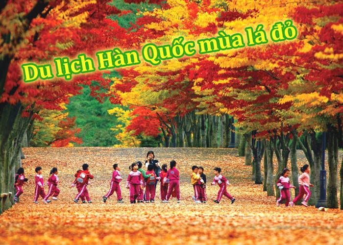 Du Lịch Hàn Quốc Mùa Lá Vàng/ Lá Đỏ 5 Ngày 4 Đêm (Bay Jin air)
