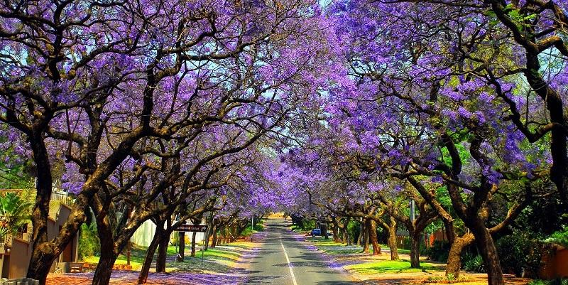 Du Lịch Nam Phi - Johanesburg - Cape Town 7 ngày 6 đêm